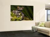 Tapichalaca Tree Frog, Tapichalaca Biological Reserve, Zamora-Chinchipe, Ecuador Wall Mural by Pete Oxford