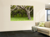 Oak Trees Wall Mural by Douglas Steakley