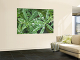 Dew Drops on Leaves Wall Mural by Rob Tilley