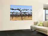Vineyard Grape Vines Wall Mural by Andrew Watson