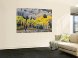 Gunnison National Forest, Colorado, USA Wall Mural by Jamie & Judy Wild