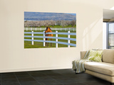 Horse Poses By Flathead Cherry Orchard Near Polson, Montana, USA Wall Mural by Chuck Haney