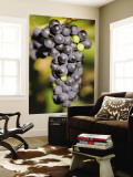Marechal Foch Grapes at the Vineyard at Jewell Towne Vineyards, South Hampton, New Hampshire, USA Wall Mural by Jerry & Marcy Monkman