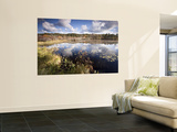 Cape Cod Wetlands, Massachusetts, USA Wall Mural by William Sutton