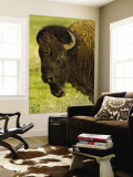 Bison Bull at the National Bison Range, Montana, USA Wall Mural by Chuck Haney