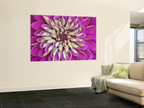 Chrysanthemum Flower Wall Mural by Adam Jones