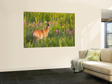 White-Tailed Deer in Wildflowers and Tall Grass, Oklahoma, USA Wall Mural by Larry Ditto