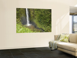 Akaka Falls, Hamakua Coast, Hawaii, USA Wall Mural by Savanah Stewart