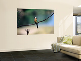 Little Bee Eater Sits on a Branch Wall Mural by Frans Lemmens