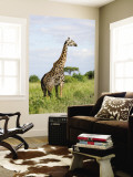 Maasai Giraffe (Giraffa Camelopardalis Tippelskirchi Wall Mural by Ariadne Van Zandbergen