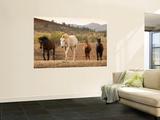 Wild Horses Wall Mural by John Sones