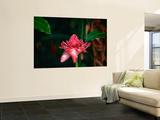 Tropical Flower, Tahiti, the Society Islands, French Polynesia Wall Mural by Peter Hendrie
