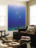 Banded Sea Snake from Rear Wall Mural by Johnny Haglund