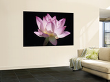 Lotus Flower (Nelumbo Lutea) Reproduction murale géante par Holger Leue
