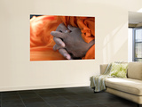 Monk's Hands Wall Mural by Brian Cruickshank