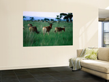 A Herd of Endemic and Endangered Swayne's Hartebeest Wall Mural by Frances Linzee Gordon