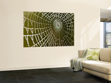 Spider Web Glistening with Dew Droplets Wall Mural by Tim Barker