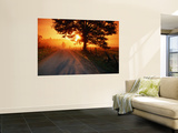 Tree and Road at Sunrise, Cades Cove, Great Smoky Mountains National Park, Tennessee Wall Mural by John Elk III