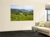 Mountains, Flower-Filled Meadows, and Farmland of the Altai Republic at Altayskiy Wall Mural by Tim Makins
