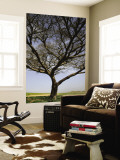 Acacia Raddiana Tree by Besor Scenic Road Wall Mural by Hanan Isachar