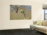 Chestnut-Headed Bee-Eater (Merops Leschenaulti) Wall Mural by Nicholas Reuss