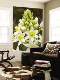 Sticky Tofieldia (Triantha Glutinosa) Flower Wall Mural by Douglas Steakley