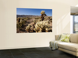 Teddy Bear Cholla Cactus Wall Mural by Carol Polich