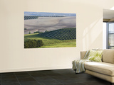 Olive Fields Share Space with Other Crops Wall Mural by Diego Lezama