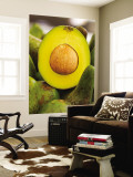 Avocados at Market Stall Wall Mural by Jane Sweeney