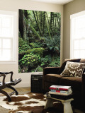 Temperate Rainforest with Ferns and Moss-Covered Tree Trunks Wall Mural by Brent Winebrenner