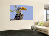 Profile of Yellow-Billed Hornbill Bird, Kenya Reproduction murale par Joanne Williams