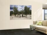 Olivenbäume Wandgemälde von Diego Lezama