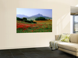 Rolling Hills with Poppies Near Olvera Wall Mural by David Tomlinson