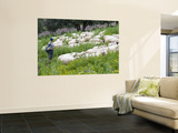 Sheep Herder Wall Mural by Olivier Cirendini