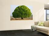 A Big Tree Wall Mural by Keren Su