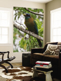 Male Blue Crowned Mot Mot Bird Wall Mural by Christer Fredriksson