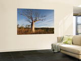 Boab (Adansonia Gregorii) in Dry Season When Tree Is Deciduous, Calder River, West Kimberley Wall Mural by Grant Dixon