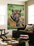 Young Tiger Wall Mural by Tony Burns