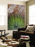 Yucca and Stone Wall Mural by Douglas Steakley
