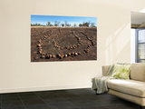 Aboriginal Ceremonial Site, West Kimberley Wall Mural by Grant Dixon