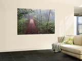 Cost Rica Monteverde Eco Tourism Canopy Walkway in Cloudfores Wall Mural by Christer Fredriksson