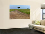 Dirt Road and Acacia Trees in Reserve Wall Mural by Doug McKinlay