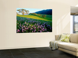 Carmel Valley in Spring Wall Mural by Douglas Steakley