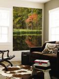 Autumn Colour and Reflection in Pond, Hokkaido University Forest Vægplakat i topklasse af Shayne Hill