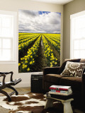 Field of Daffodils Wall Mural by Thomas Winz