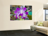 Flowering Orchid Wall Mural by Holger Leue