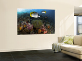 Lined Butterflyfish Swim Over Reef Corals, Komodo National Park, Indonesia Mural por  Jones-Shimlock