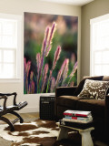 Grass Seed Heads Wall Mural by Paul Kennedy