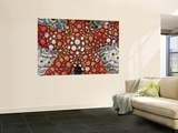 Partial View of Colorful Sea Star Over a Sea Cucumber, Raja Ampat, Indonesia Wall Mural by  Jones-Shimlock