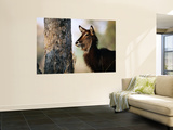 Adult Female Waterbuck (Kobus Ellipsyprimus) Wall Mural by Andrew Parkinson